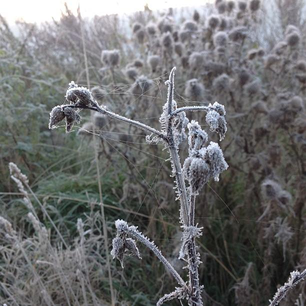 October 10, 2012 at 05:05PM Från imorse när jag vaknade, första riktiga frost natten.. #alskarattsovaute by skogsmullen